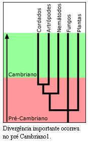 Explosão Cambriana