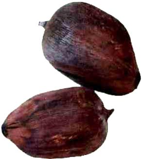 Babaçu