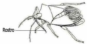 Filo Artrópodes