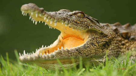 Crocodilo e Jacaré