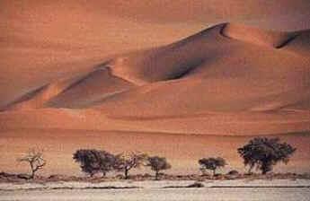 Deserto - Biomas Terrestres