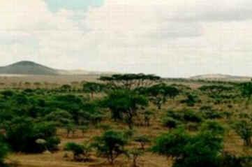 Savana - Biomas Terrestres