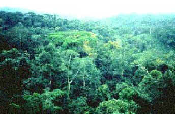 Floresta Tropical - Biomas Terrestres