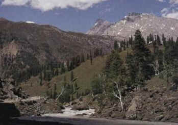 Alpino - Biomas Terrestres