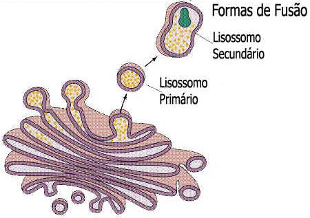 Lisossomos