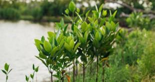 Crescimento Vegetativo