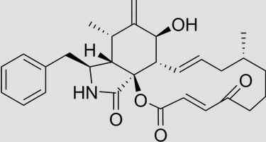 Citocalasinas