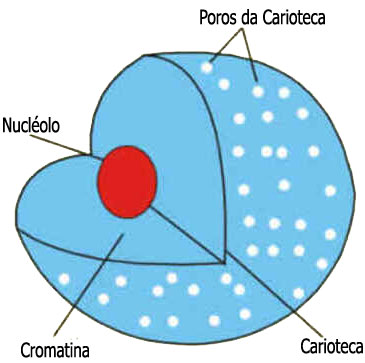 Carioteca