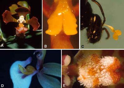 Cultivo de Orquídeas