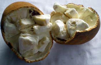 Cupuaçuzeiro