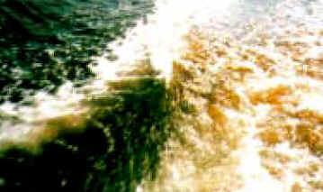Fitoplâncton