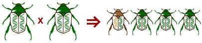 Microevolução