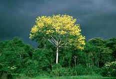 Biodiversidade Amazônica