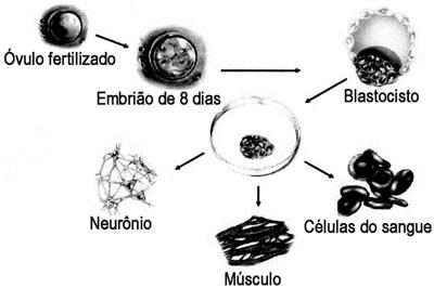 diferenciacao-celular-2