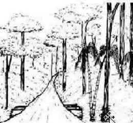 Manejo Florestal