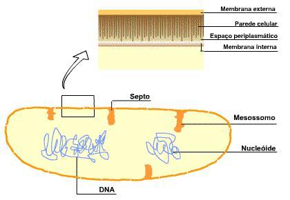 Morfologia das Células