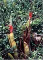 Parque Nacional de Restinga de Jurubatiba