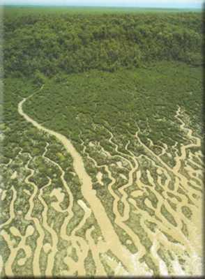 Parque Nacional do Cabo Orange