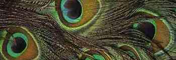 Penas das Aves