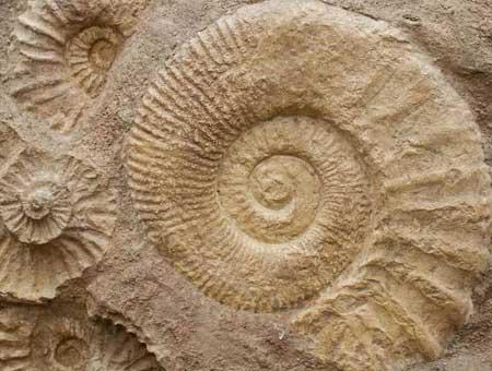 Período Devoniano