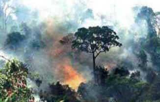 Queimadas e o Código Florestal