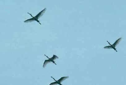 Sentido das Aves