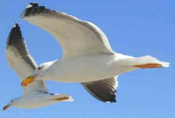 Vôo das Aves