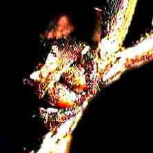 Anatomia das Aranhas