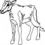 animais-28