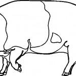 animais-29