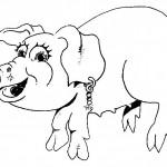 animais-36
