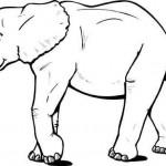 animais-65