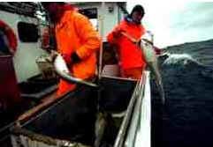 História do Bacalhau