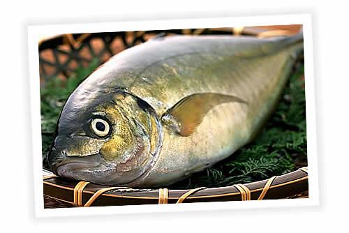 Receitas de Peixes