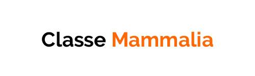 Classe Mammalia