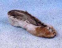 História do Sapato