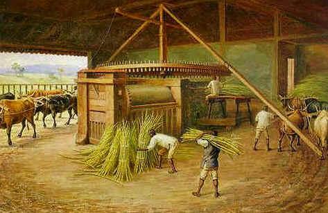 Produção da Cachaça