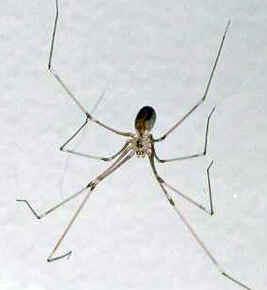 Tipos de Aranha