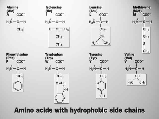 Aminoácidos Apolares