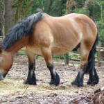 Cavalo1