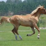 Cavalo19