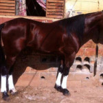 Cavalo5