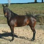 Cavalo8