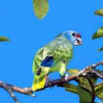 Papaga2