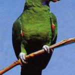 Papaga3