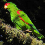 Papaga4