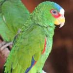 Papaga6