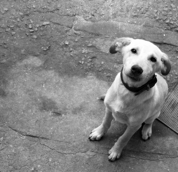 Adoção de Animais