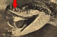 Aspectos Morfológicos e Funcionais da Cobra