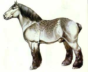 Cavalo Brabantino